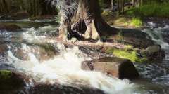 Forest river high contrast tight shot - stock footage