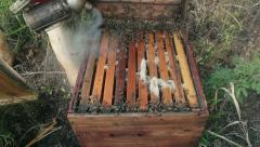 Smoking and brushing bees into hive Stock Footage