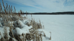 Winter, frozen snow covered lake, cattails blowing in breeze - stock footage