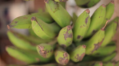 Stock Video Footage of Bananas Close-up
