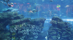 Inside Aquarium Dubai Mall Shopping Center Illuminated Interior Stingray Sharks Stock Footage