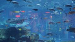 Aquarium Dubai Mall Stingray Shark Pelagic Fish Sea Dragons Crab People Shoppers - stock footage