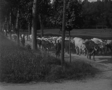 WW1 - French Soldiers Delivering Living Animals To Front 01 Stock Footage
