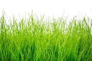 Stock Photo of green grass isolated on white background