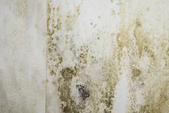 Mildewed walls Stock Photos