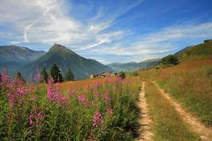 Fields and meadows in alps. Stock Photos