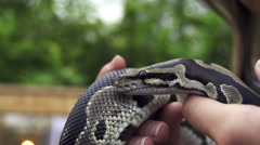 SLOW MOTION: Snake in female hands Stock Footage