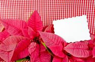 Stock Photo of white card in poinsettia