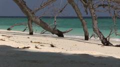 Maldives - bald tree on the beach Stock Footage
