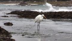 Egret In Ocean Eats And Walks Away - stock footage