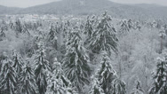 Stock Video Footage of AERIAL: Forest in winter