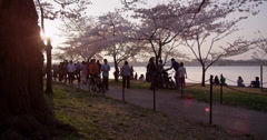 Cherry Blossoms Washington DC People walking on path Stock Footage