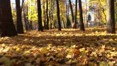 Low Flying over yellow autumn leaves lying on the ground. Flycam. Stock Footage