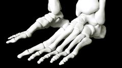 Human foot skeleton - stock illustration
