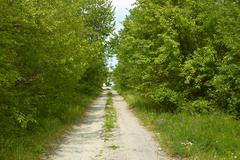 rural road between trees - stock photo