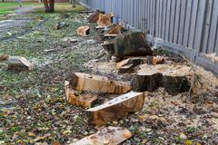 Cuted fallen spruce Stock Photos