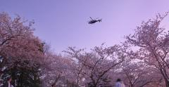 Cherry Blossoms Washington DC Helicopter Fly-By Stock Footage