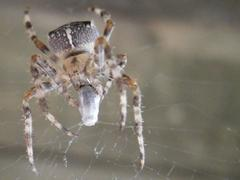 Spider eat a house-fly - stock photo