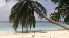 Maldives - Palm tree on a beach Stock Footage