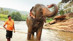 Circus elephant in water Stock Footage