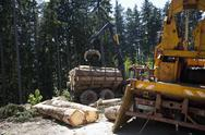 Stock Photo of Logs loading in commercial land vehicle