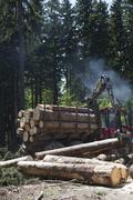 Logs loading in commercial land vehicle - stock photo