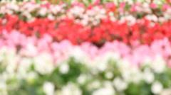 Flowergardenfocusing HD Stock Footage