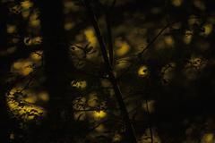 Close-up of branch at dusk Stock Photos