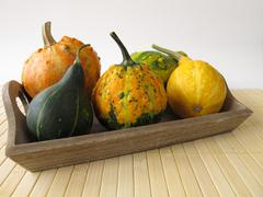 Autumnal decoration with ornamental gourds - stock photo