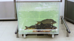Live fish in supermarket Stock Footage