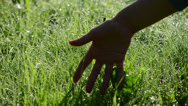 Stock Video Footage of woman hand dew grass