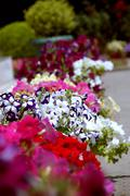 Flowers in flowerbeds (flowers in the botanic garden at crimea) Stock Photos