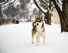 Mongrel dog in winter - stock photo