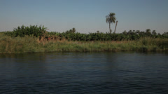 Nile shores from Dahabiya, Egypt - stock footage