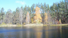 Fall daylight landscape, autumn forest tree near water. Stock Footage