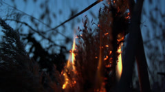 Dry marsh grass burning in slow motion Stock Footage