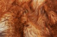 Stock Photo of macro wool bright-red dog