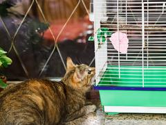 Cat watching bird in cage Stock Photos