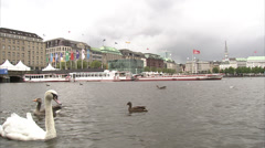 Alster lake in Hamburg with ducks Stock Footage