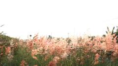 Flowersbythesideoftheroad HD Stock Footage