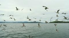 Seagulls in Vadivostok Harbor Stock Footage