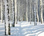 Stock Photo of path in sunny winter forest