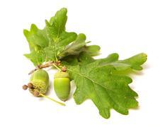 green acorn - stock photo