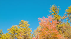 Tilting Down from Fall Colors to Mountain Pond with Waterfalls Stock Footage