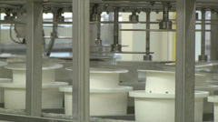 Producing traditional cheese, compressing cheese in containers Stock Footage