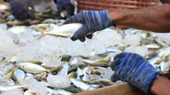 Fish sorting by size in the market Stock Footage