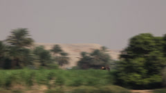 Falcon in flight on the Nile river, Egypt - stock footage