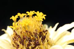 flower close up spring season nature background - stock photo