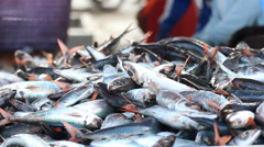 Fish Sorting By Size Stock Footage