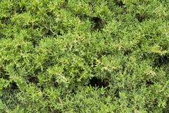 Green vegetation detail Stock Photos